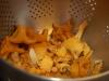 Goda svampar