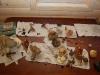 Bordet med svamp. Vart tog kantarellerna vägen